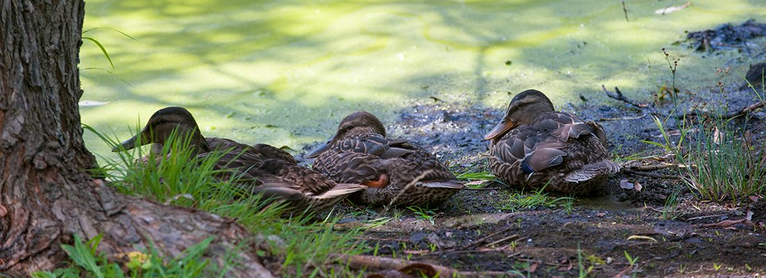 Ducks sitting on shoreline